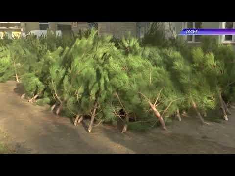 МТВ-плюс Мелитополь: У Мелітополі розпочалася торгівля новорічними красунями: де працюють ялинкові базари?