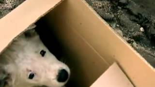"""Инициативная группа """"Забота о животных"""" г.Смоленск"""