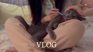 Vlog #12 고양이랑 사는 일상 브이로그 | 테페 …