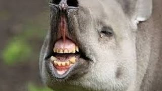 Funny Animal Fails Compilation | Animals Funny Clips Fail Vdeos 2016