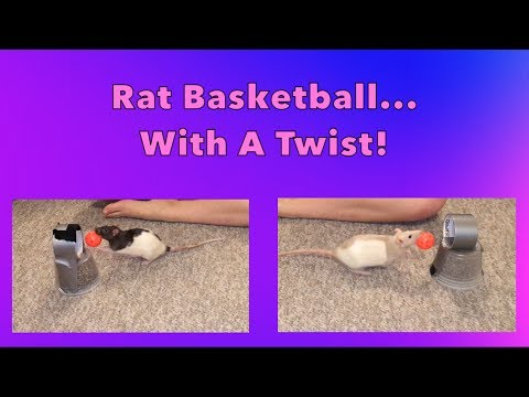 Rat Basketball... With A Twist!