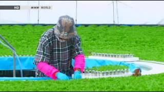 Beginner Hydroponics - Amazing Hydroponic farm Japan Gandpa Dome