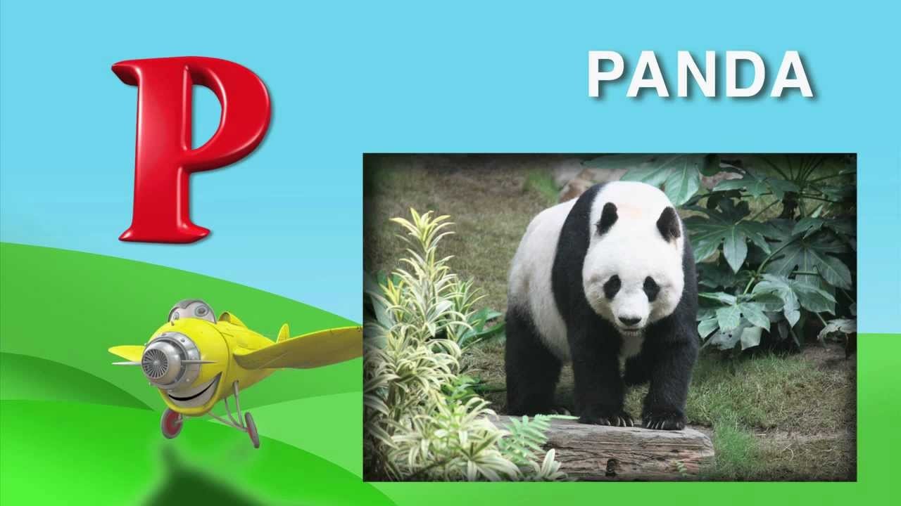 What animals begin with the letters P & Q From I Love My ABC s