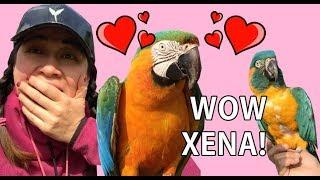 MEET NEW BABY BLUE THROAT MACAW *Xena*