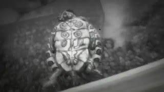моя черепаха умирает когда я подхожу.Но потом она раслабляется и оживает