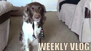 INTERACTIVE Dog Vlog (Vlog #115)