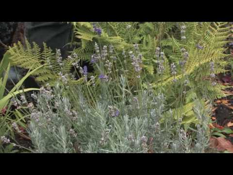 Garden Maintenance : Plants That Repel Insects in Gardens