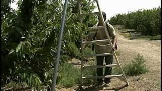Tripod Ladder Safety