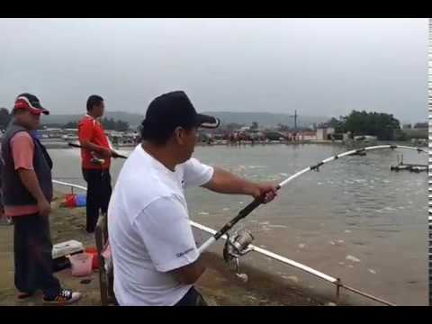 新竹 海風 龍膽石斑池 C池  103年開池 小賴118斤 跳線~起魚 全記錄!!!