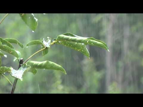 Relaxare Fără sunet ploaie Thunder și un pic de dormit Ideal intens 8 ore
