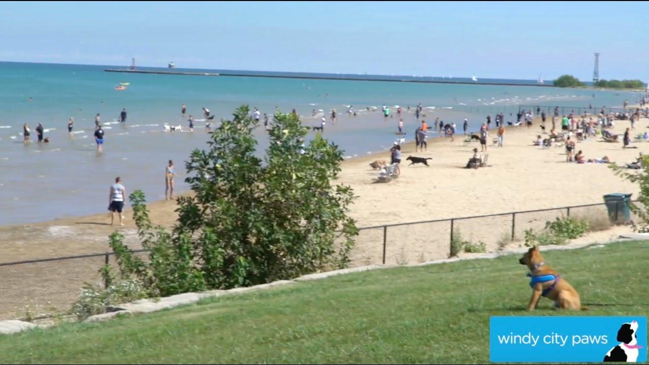 Montrose Dog Beach Chicago Friendly Area