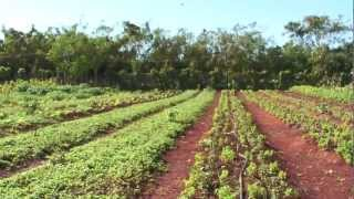 Agricultura Urbana en Cuba 2/3