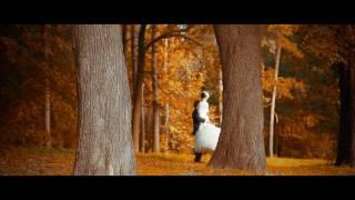 Осенний романс (Свадебное видео, Киев)