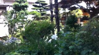 Download Video July, 17, 2012: Watching a semi active bee garden in Japan... bee balm #SaveOurBees? MP3 3GP MP4