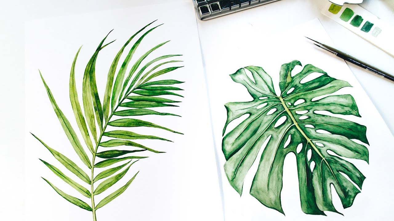 Tropical Watercolor Leaves Painting Time Lapse Monstera Palm Leaf Baby Lion Youtube Why are the leaves on my monstera limp and drooping? tropical watercolor leaves painting time lapse monstera palm leaf baby lion