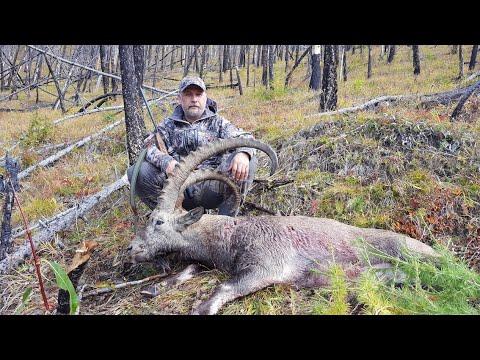 Охотничьи путешествия по Алтаю. Охота на козерога.