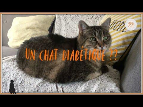 MON CHAT DIABETIQUE -- Les Chathuttes