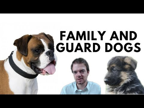 Best Family and Guard Dog Breeds