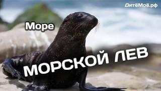 Морской лев. Энциклопедия для детей про животных. Море