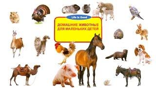 Описания домашних животных для маленьких детей