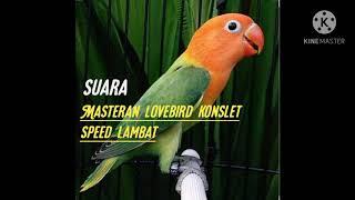 Download lagu MASTERAN LOVEBIRD KONSLET SPEED LAMBAT,,