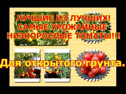 ЛУЧШИЕ ИЗ ЛУЧШИХ!САМЫЕ УРОЖАЙНЫЕ НИЗКОРОСЛЫЕ ТОМАТЫ!!!Для открытого грунта | низкорослые | урожайные | открытого | томатов | томаты | лучших | лучшие | грунта | сорта | самые