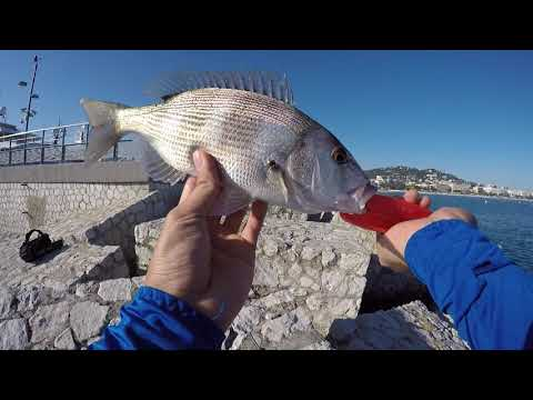 Fishing For Barracudas & Saltwater Fish In The French Riviera Mediterranean Sea!