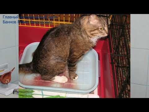 Мочекаменная болезнь кошек и собак