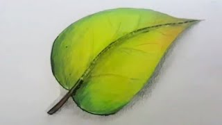 How to Draw & Shade a Simple Leaf with Normal Colorpencils in 5 mins