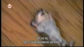 Kot i mysz - Fail
