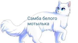 """Коты-воители~~~ Белогривка и Остролап- """"Самба белого мотылька"""""""