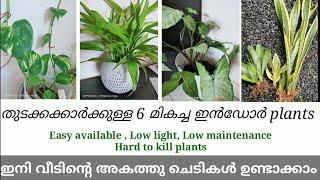 6 മികച്ച ഇൻഡോർ plants for beginners l കുറഞ്ഞ ചെലവിലുള്ള plants l low cost indoor plants