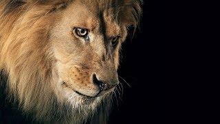 Дикая природа Африки.Живая энциклопедия Африки. Львы, тигры, крокодилы, гепарды. Wildlife