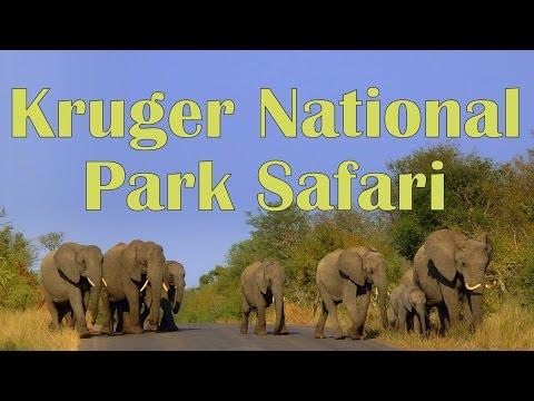 Kruger National Park Animal Safari in South Africa