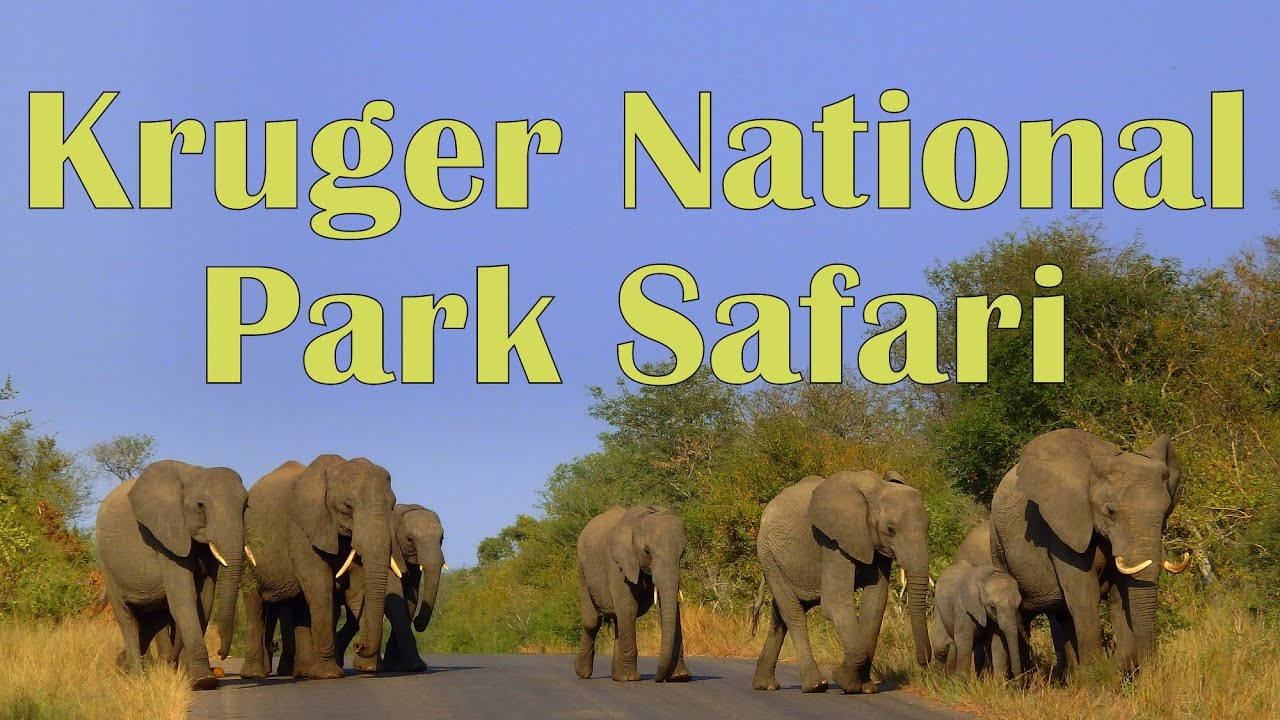 Kruger National Park Safaris
