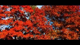 Autumn Reverie | Cape Cod [Samsung Galaxy S4]