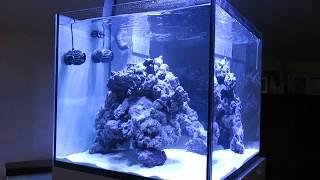 Il mio primo cubo marino (acquario marino  aquarium tank) con CaribSea Liferock shapes