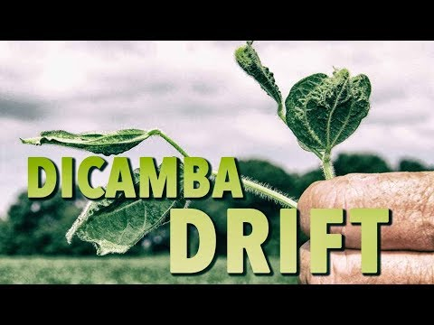 Dicamba Drift Spreading Destruction Of Food & Health