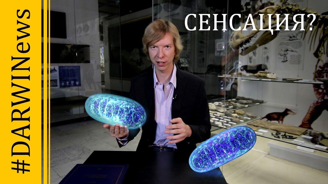 Микроб LUCA - ровесник Земли. Новые факты о происхождении жизни. #DARWINews 9.4