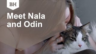 Meet Nala and Odin, the Norwegian Forest cats