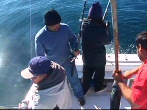 Charter Fishing Ensenada Mexico