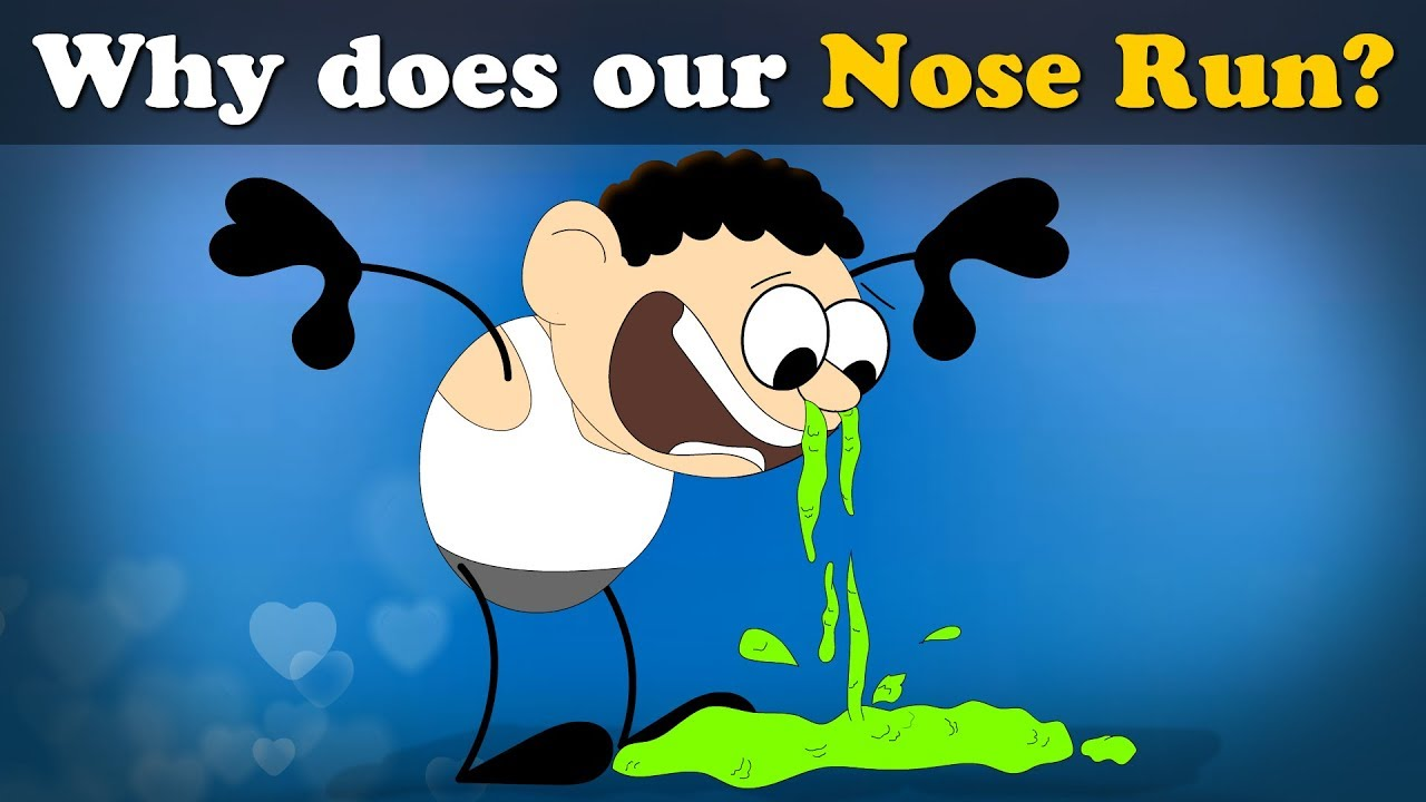 Why Does Our Nose Run Aumsum Kids Science Education Children Youtube