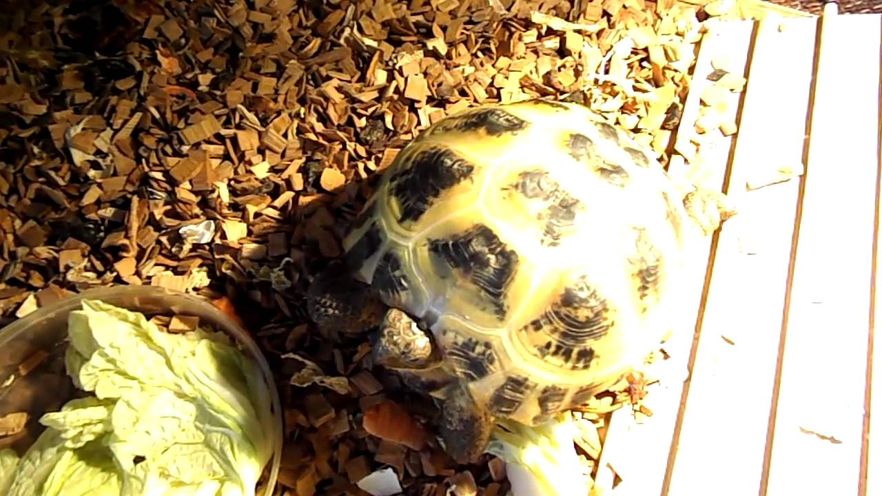 turtle Черепаха дом всегда есть! - YouTube