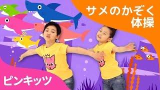 ワァァーサメだ!サメのかぞく体操★トゥルルットゥル★ Fun Rhythm ピンキッツ体操しよう ピンキッツ童謡
