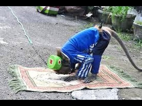 MONYET BISA SHOLAT Di Tugu Monas - Monkey Attraction - Topeng Monyet [HD]