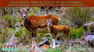 Carlit Hôtel à Font-Romeu  séjour vacances à la montagne dans les Pyrénées Orientales