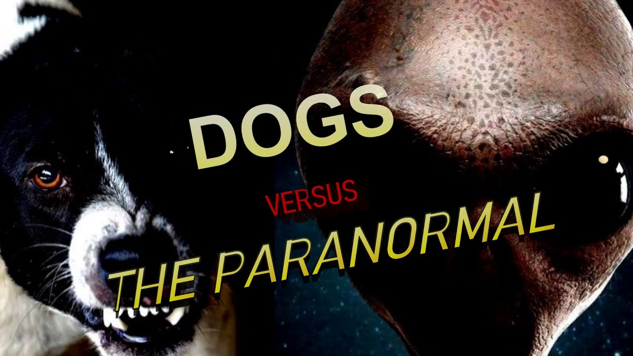 """""""Dogs Versus The Paranormal""""   Paranormal Stories"""