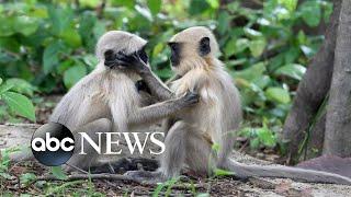 Monkeys, baseball and swimming : World in Photos, July 16