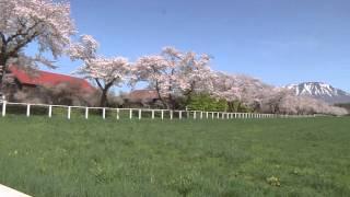 Koiwai Farm ( Shizukuishi Town )