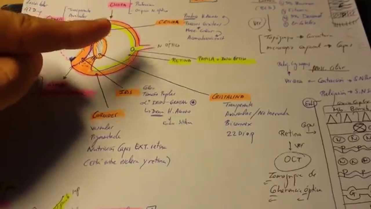 Tema 0. Repaso ESQUEMA anatomia del ojo. - YouTube